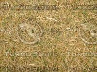 Lawn Carpet cz3 141
