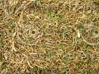 Lawn Carpet cz3 145