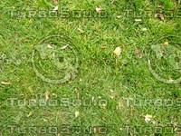 Lawn  cz4 067