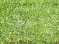 Lawn cz4 068