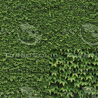 Ivy wall tileable