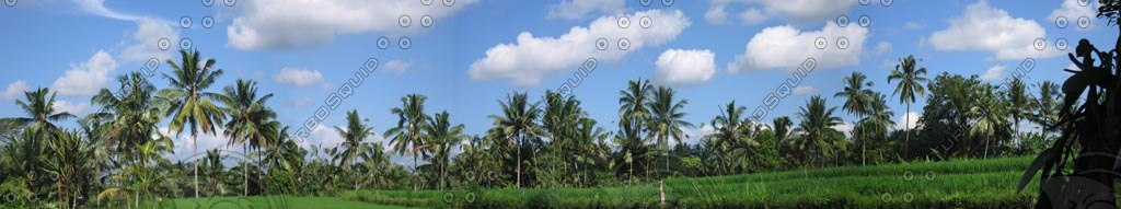 panoramic-tgp.jpg