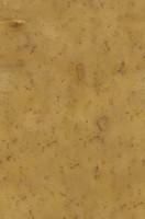 potato_skin.jpg