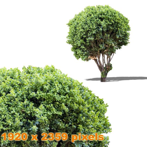 shrub_4_thumb.jpg