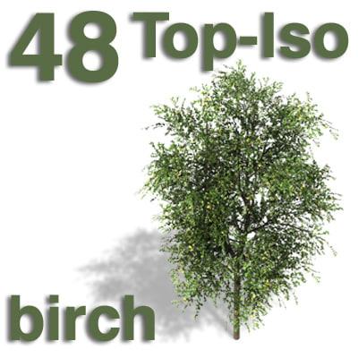 top_birch.jpg