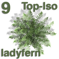 Top Views - ladyfern
