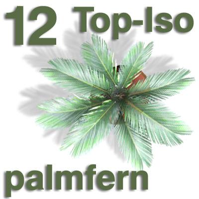 top_palmfern.jpg