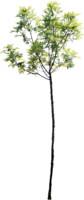 tree80