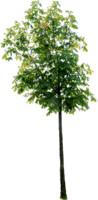 tree82