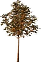 tree92