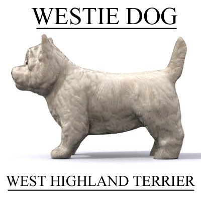 westie_dog2.jpg