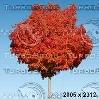 02_tree_autumn004.zip