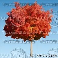 02_tree_autumn005.zip