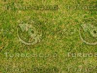 Lawn 20090530 002