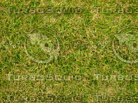 Lawn 20090530 012