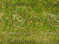Lawn 20090530 016