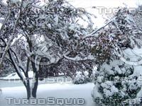 Snow Tree 20091112 040