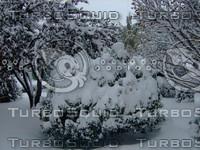 Snow Tree 20091112 041