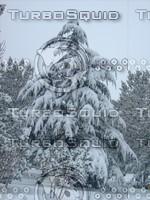 Snow Tree 20091112 054