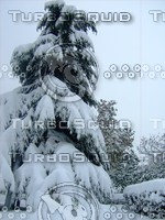 Snow Tree 20091112 064