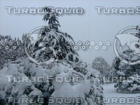 Snow Tree 20091112 068