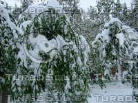 Snow Tree 20091112 086