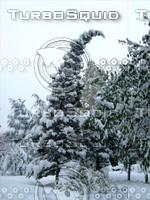 Snow Tree 20091112 095