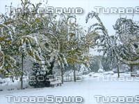 Snow Tree 20091112 112