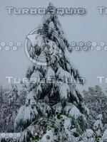 Snow Tree 20091112 122