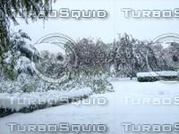 Snow Tree 20091112 139