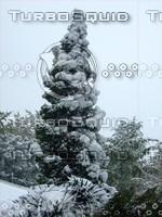 Snow Tree 20091112 148
