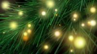 Branch N Lights