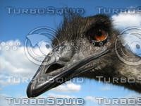 EmuHeadshot.jpg