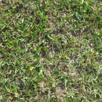 Grass01.png