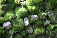 Stone moss wall
