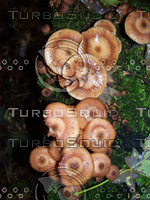 Mushroom 4.jpg