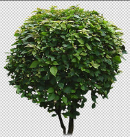 asian plant 04.psd