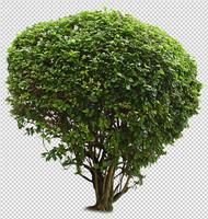 asian plant 05.psd