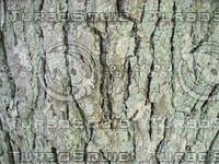 bark02.jpg