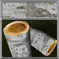bark6.jpg