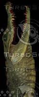 crocodile_11.jpg