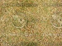 Lawn Carpet cz3 135