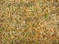 Lawn Carpet cz3 142