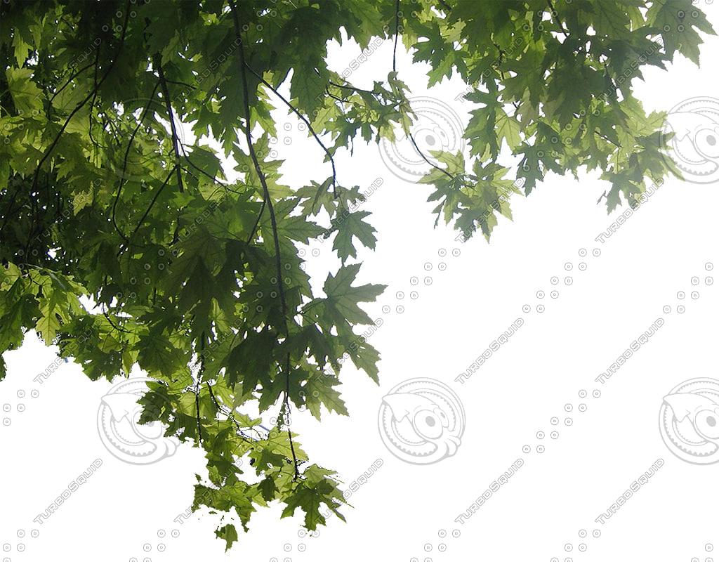 foreground-tree.JPG