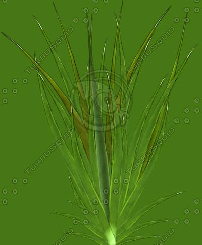 grass_low.jpg