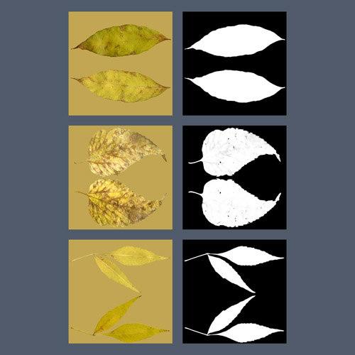 leaves_fall_JG_preview1.jpg