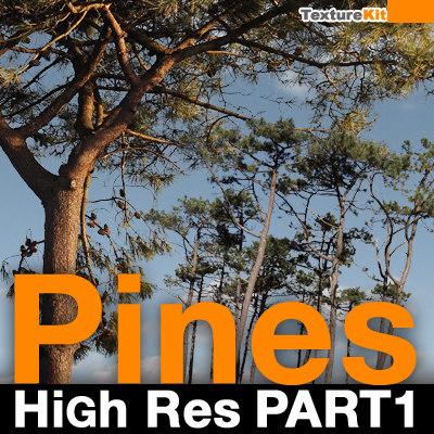 pines00_thumbnail.jpg