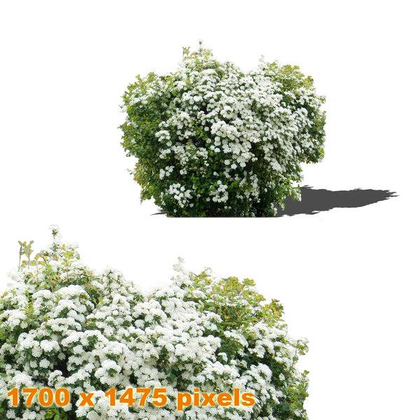shrub_5_thumb.jpg