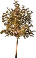 tree90