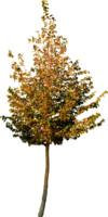 tree98